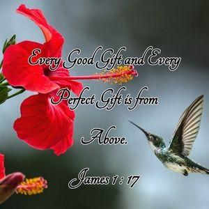 Pillow Cover- New-Christian James 1:17 Hummingbird